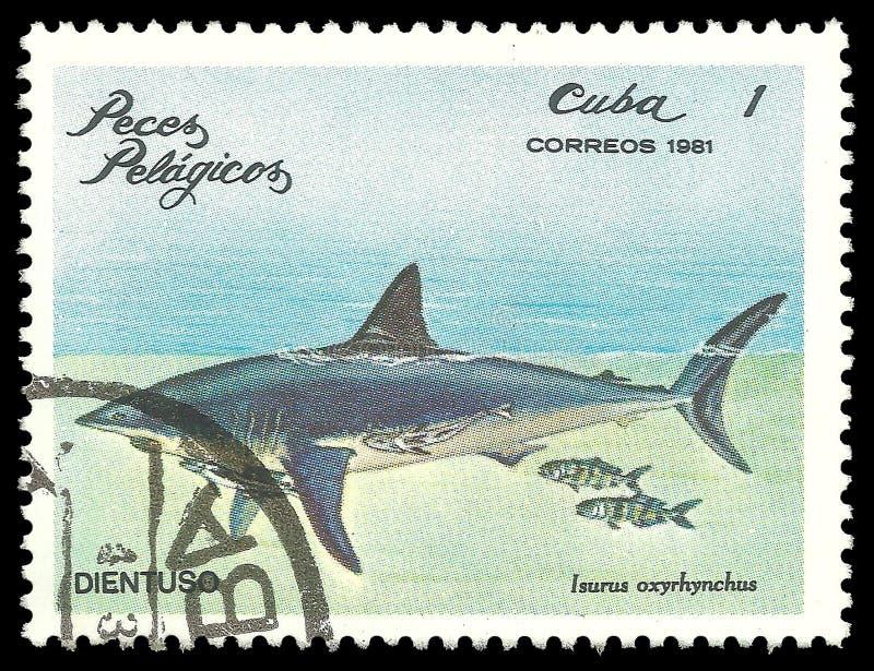 Tiburón de mako de Shortfin fotografía de archivo libre de regalías