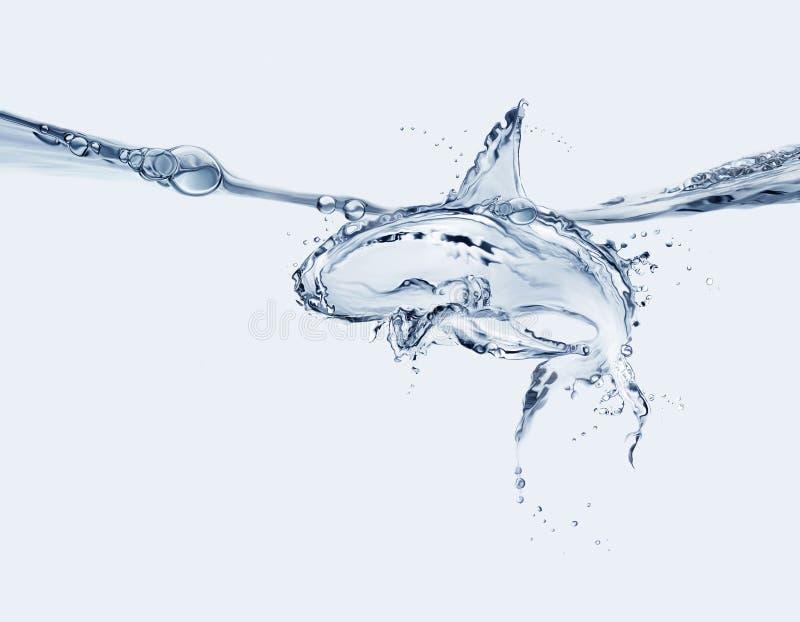 Tiburón del agua foto de archivo