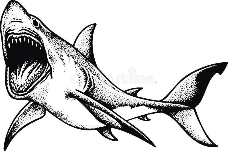 Tiburón grande aislado libre illustration