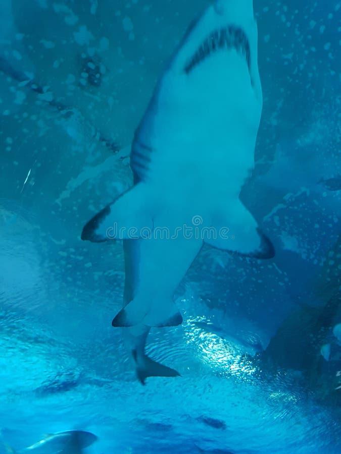 Tiburón - OceanogràValencia fic imágenes de archivo libres de regalías