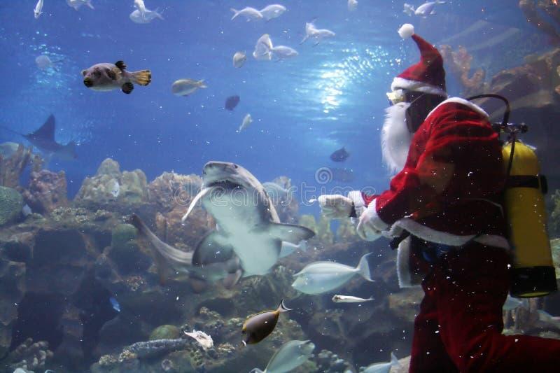 Tiburón que introduce de Papá Noel fotografía de archivo