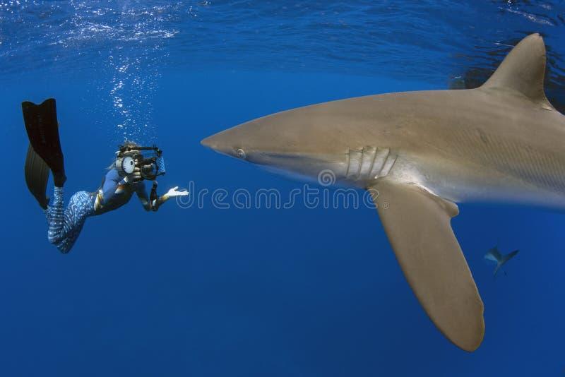 Tiburón sedoso con la muchacha, las Islas Galápagos fotografía de archivo