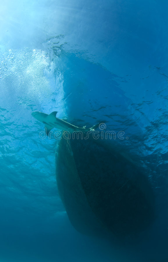 Tiburón y barco fotos de archivo libres de regalías