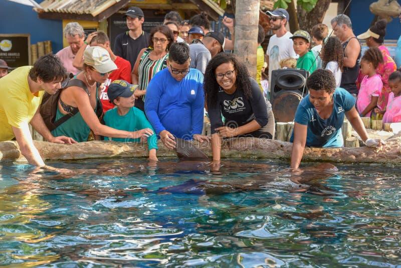 Tibur?n de enfermera de caricia de la gente en el tanque de Tamar del proyecto en el Praia hacer Forte en el Brasil imagen de archivo libre de regalías