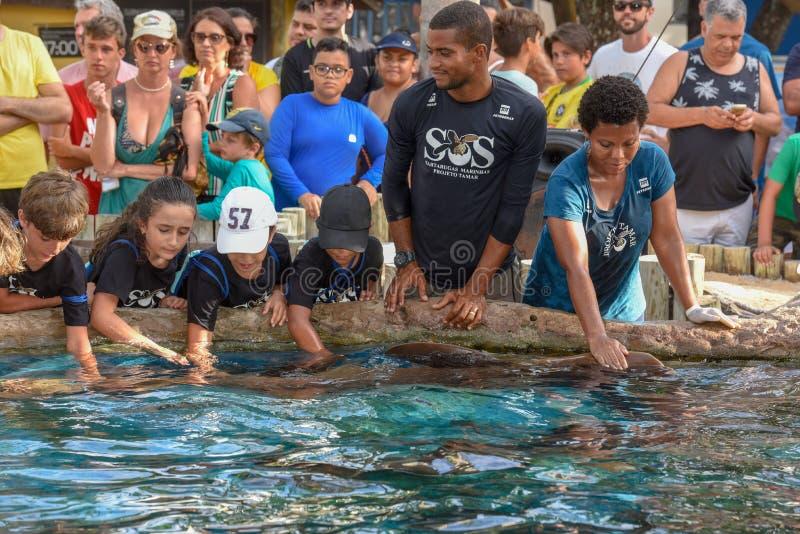 Tibur?n de enfermera de caricia de la gente en el tanque de Tamar del proyecto en el Praia hacer Forte en el Brasil imágenes de archivo libres de regalías