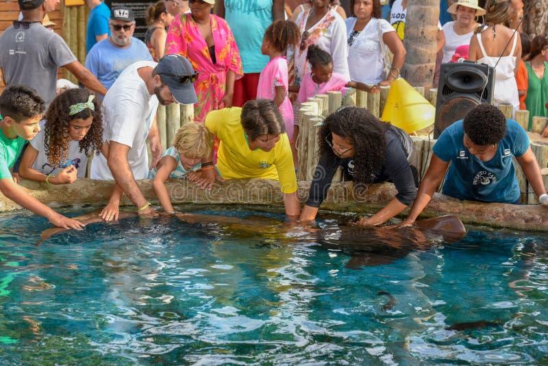 Tibur?n de enfermera de caricia de la gente en el tanque de Tamar del proyecto en el Praia hacer Forte en el Brasil fotos de archivo libres de regalías