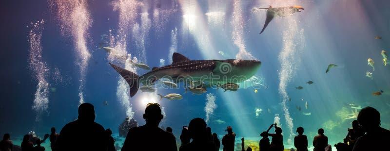Tiburones de ballena y muchas clases de natación de los pescados en acuario foto de archivo