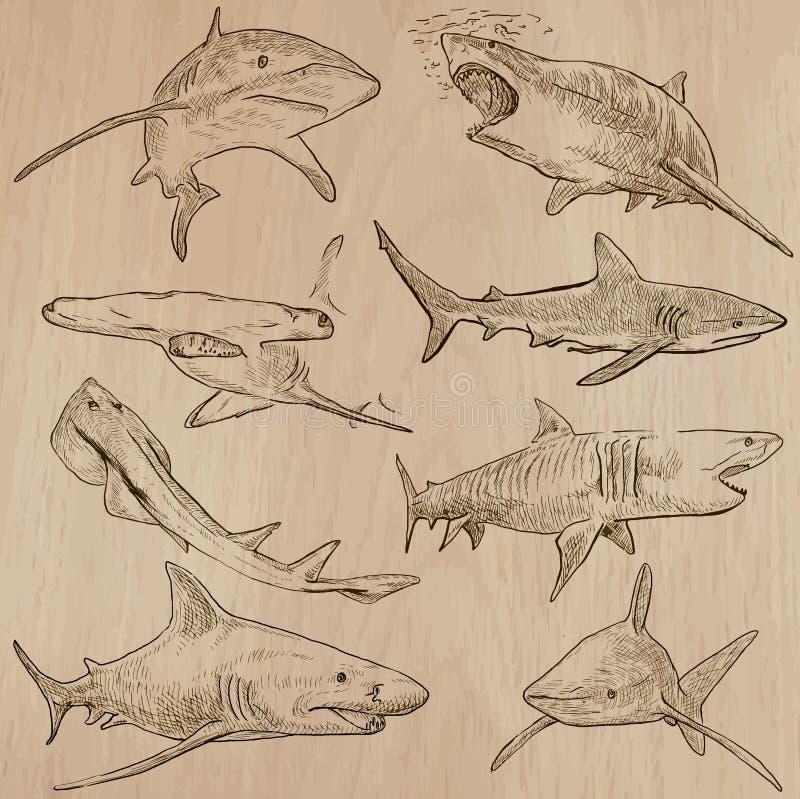Tiburones - un paquete dibujado mano del vector stock de ilustración