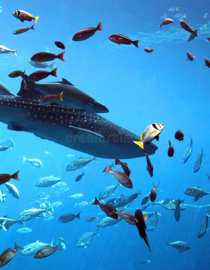 Tiburones y pescados fotografía de archivo