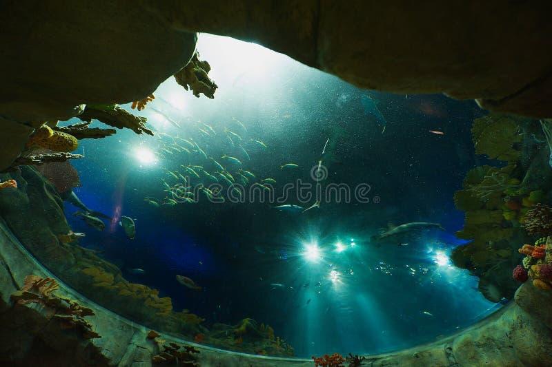 Tiburones y pescados en un acuario enorme en el parque del océano en Hong Kong, China foto de archivo libre de regalías