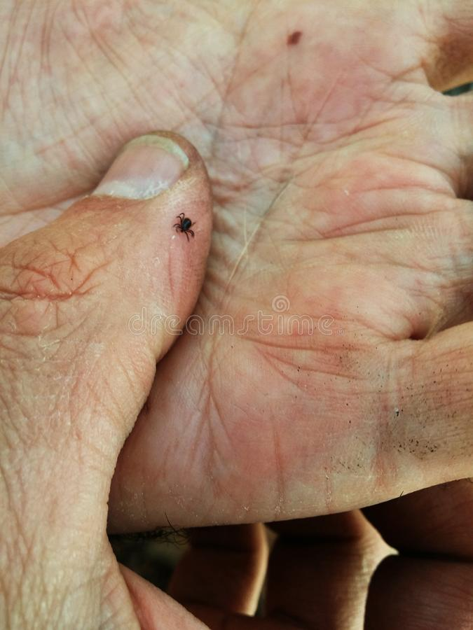 Tick-borne. Encephalitis sitting on the arm royalty free stock images