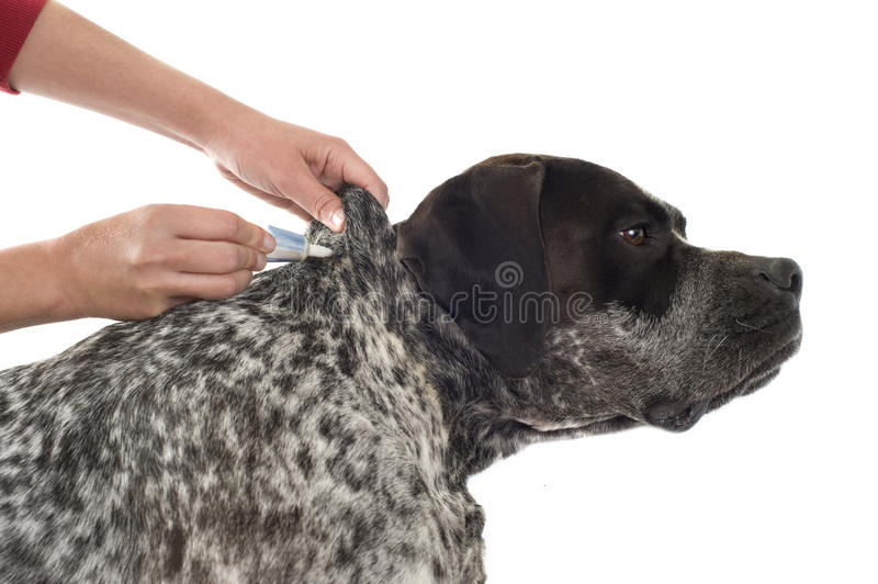 Download Tick and flea prevention stock photo. Image of bottle - 26163088