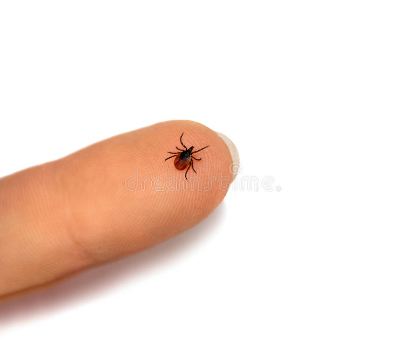 Tick human finger royalty free stock images