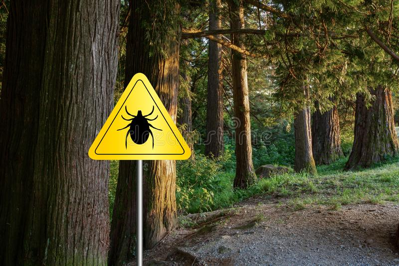 Ticks sign in the wild green forest. Tick insect warning sign in infected forest. Lyme disease and meningitis transmitter stock images