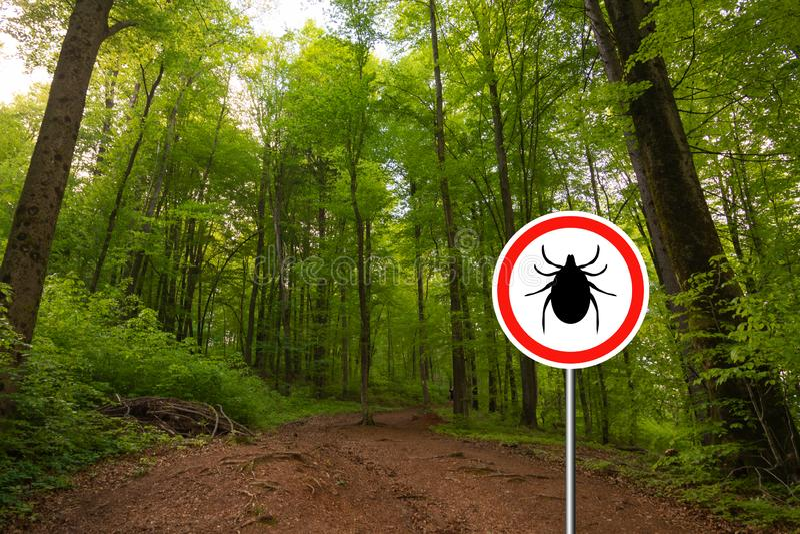 Tick sign in a green forest. Tick insect meningitis warning sign in nature forest. Lyme disease and tick-borne meningoencephalitis transmitter stock photo