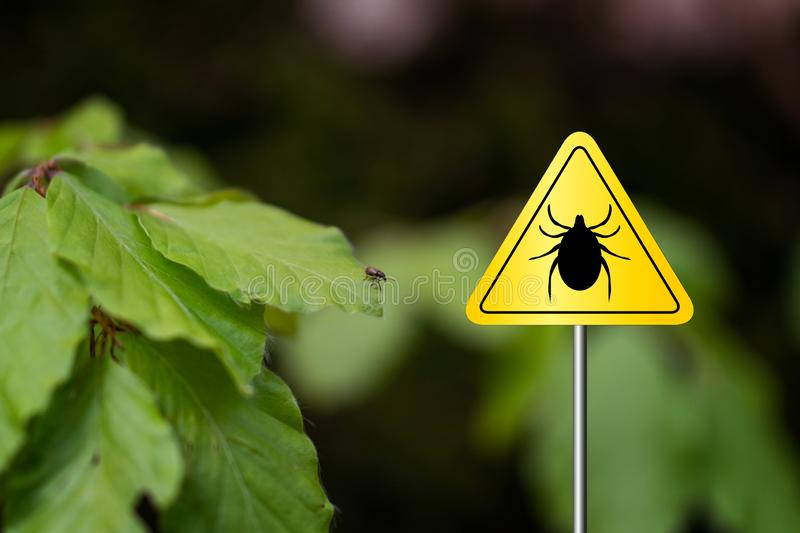 Tick sign in a green forest. Tick insect meningitis warning sign in nature forest. Lyme disease and tick-borne meningoencephalitis transmitter royalty free stock photos