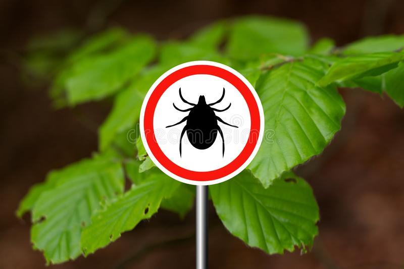 Tick sign in a green forest. Tick insect meningitis warning sign in nature forest. Lyme disease and tick-borne meningoencephalitis transmitter royalty free stock photography