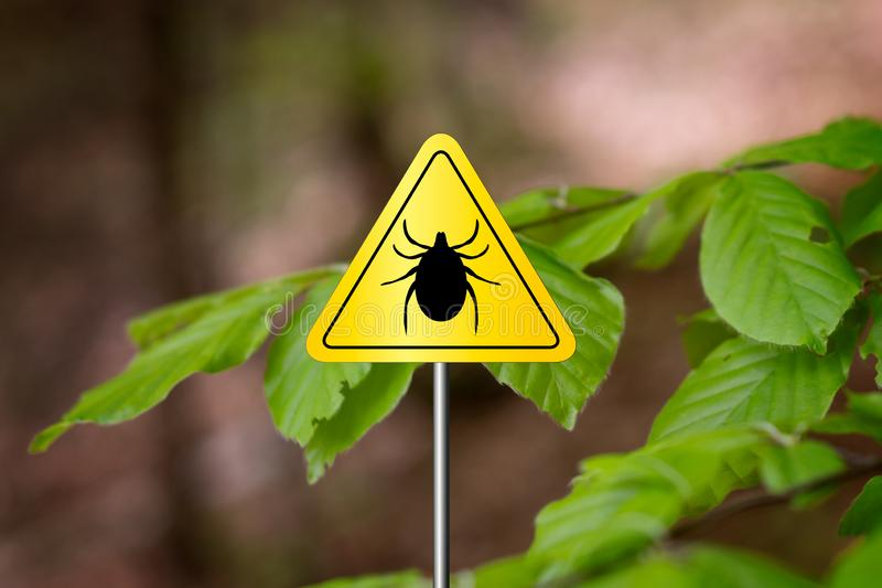 Tick sign in a green forest. Tick insect meningitis warning sign in nature forest. Lyme disease and tick-borne meningoencephalitis transmitter royalty free stock images