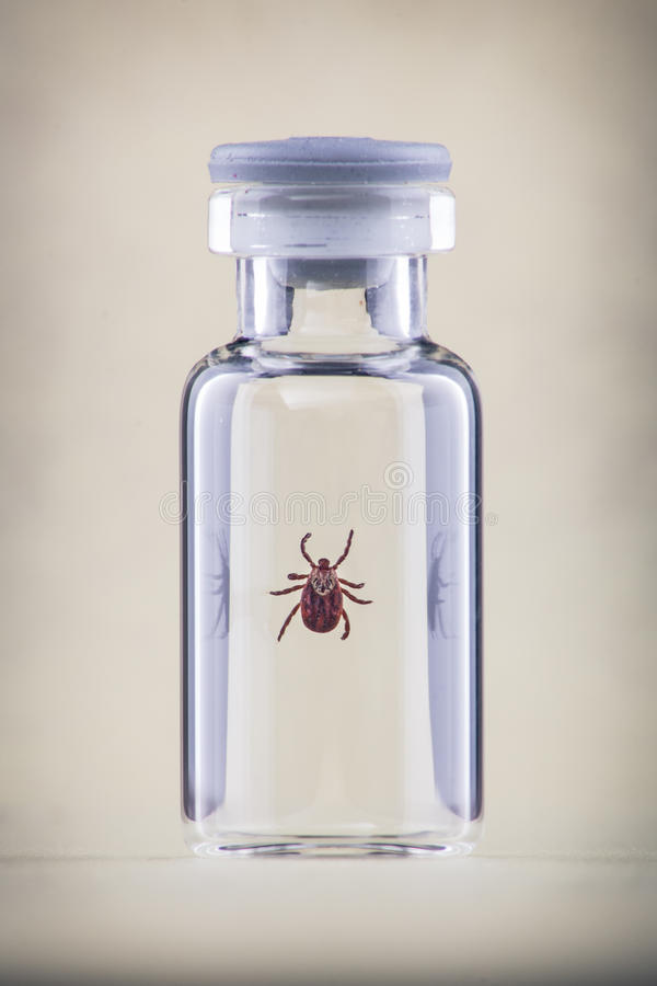 Tick in a vial