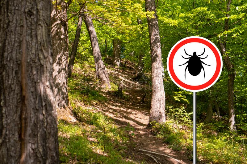 Ticks sign in the wild green forest. Tick insect warning sign in infected forest. Lyme disease and meningitis transmitter stock photography