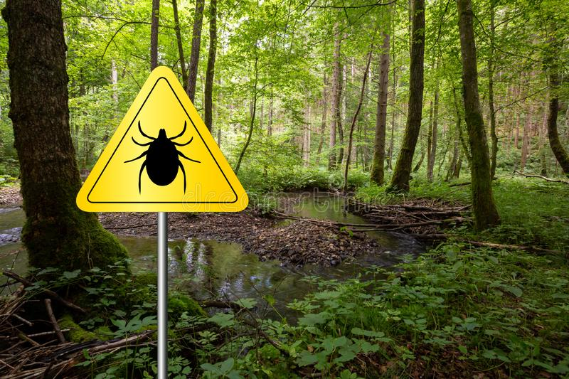 Ticks sign in the wild green forest. Tick insect warning sign in infected forest. Lyme disease and meningitis transmitter stock photos