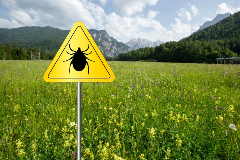 Ticks sign in the wild green meadow. Tick insect warning sign on infected meadow. Lyme disease and meningitis transmitter royalty free stock images