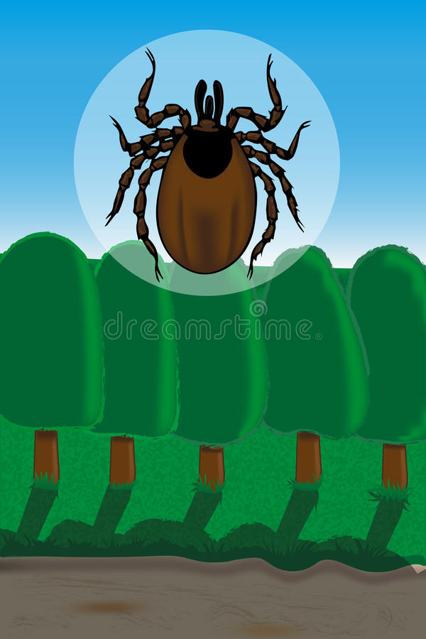 ticks are vectors of Lyme borreliosis and tick-borne encephalitis royalty free stock photo