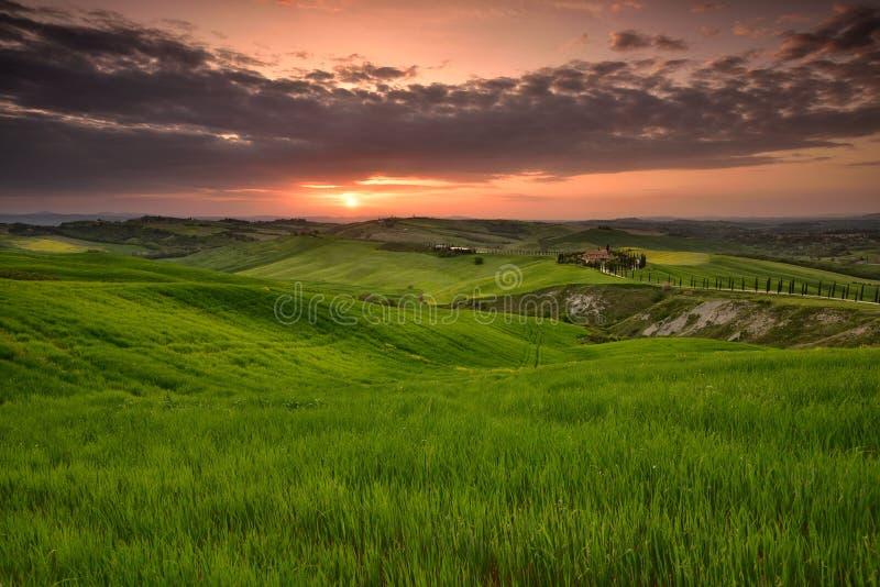 Tid för Tuscany solnedgånglandskap på våren med det gröna fältet arkivfoton