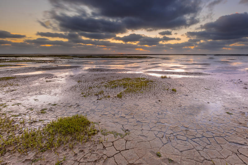Tidal marsh mud flat. New land being created in the mud-flats of a tidal marsh in the Waddensea on the Groningen coast in the Netherlands stock photos