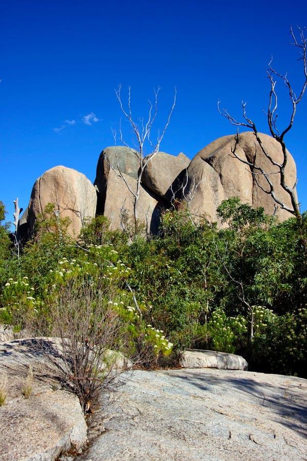Tidbinbilla-Naturreservat, Australien lizenzfreie stockfotografie
