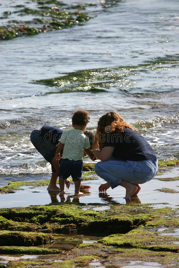 Download Tide Pool stock photo. Image of searching, ocean, children - 7348