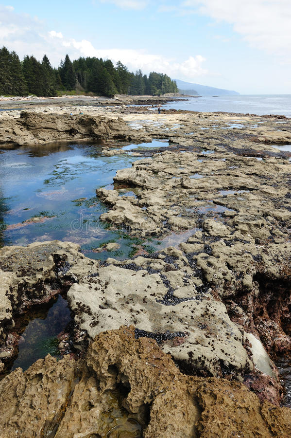 Download Tide Pools On Beach Royalty Free Stock Photography - Image: 14460237