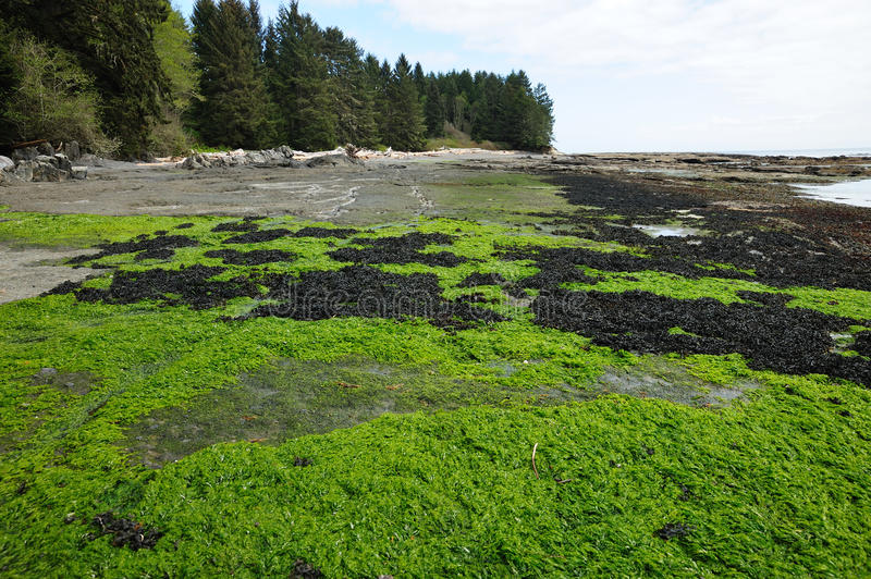 Download Tide pools and seagrass stock image. Image of shore, animal - 14540055