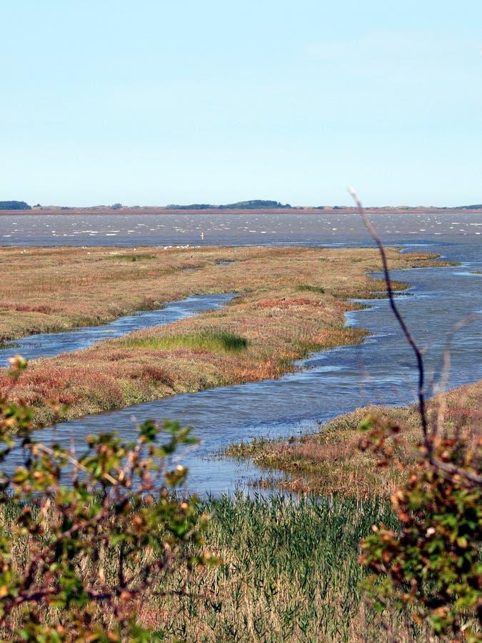 tideland för hav för borkumönorr arkivfoto