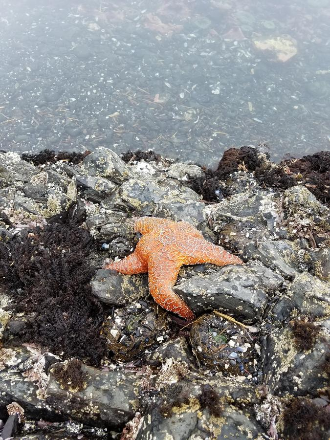 Tidepoolwonder de kust van Oregon stock fotografie