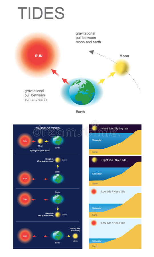 Tides. Gravitational pull between moon and earth, Gravitational pull between sun and earth. Health care education infographic. Vector design royalty free illustration