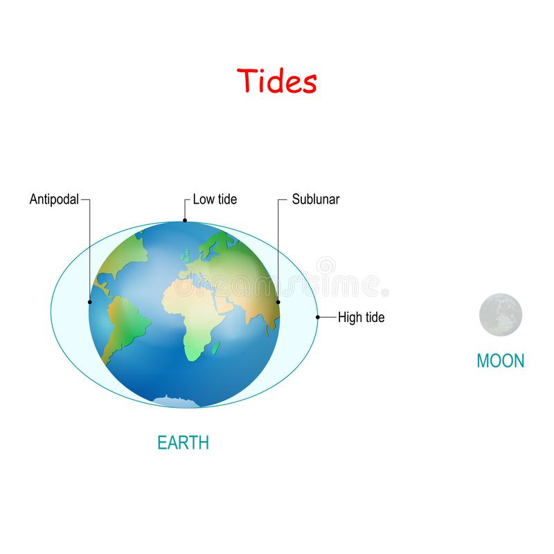 Tides. High and low tides. water level. Tides depend where the sun and moon are relative to the Earth. Gravity and inertia creating tidal bulges royalty free illustration
