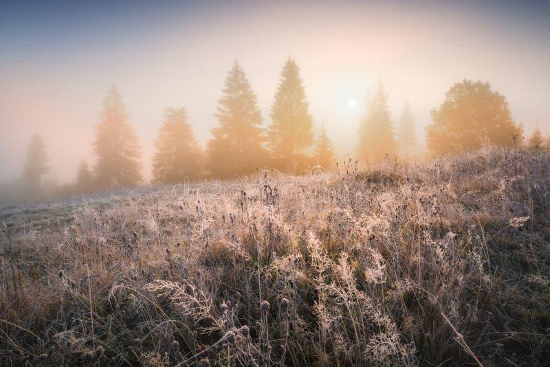Tidig djupfryst morgon med rimfrost på ett gräs arkivbild