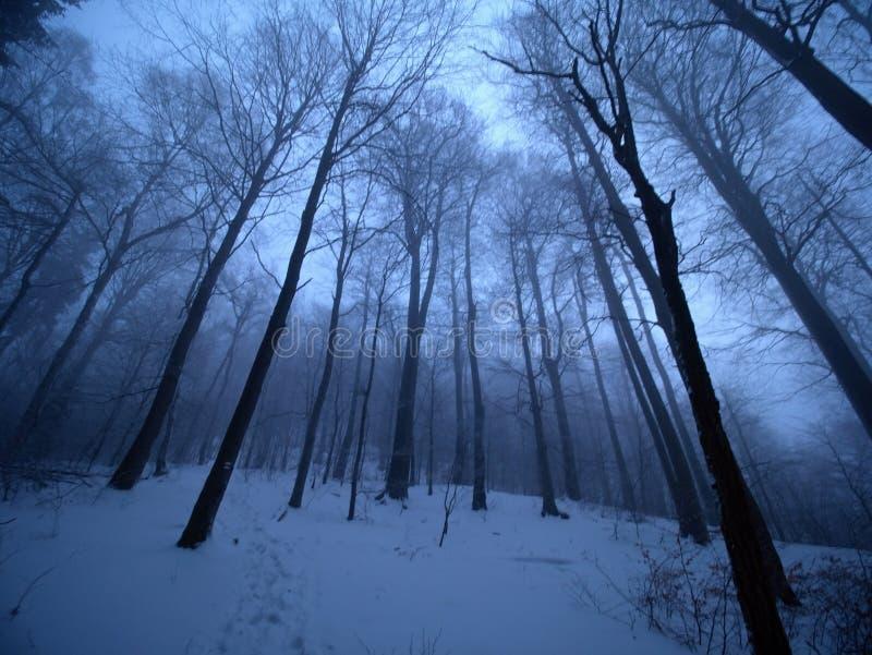 Tidig förkylning och dimmig morgon på rimfrostbokträdträd i snöig vinterskog på bergmaximumet, royaltyfri foto
