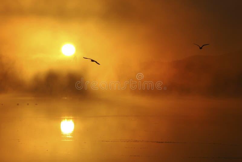 tidig fallmorgon arkivfoton