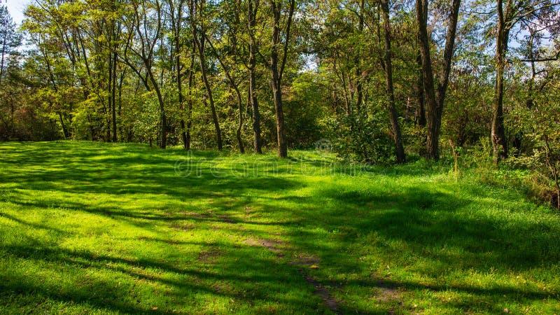 Tidig höst i lövskog och gräsmatta med grönt gräs arkivbilder