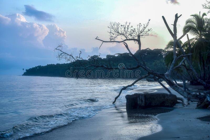 Tidig morgon med drivved längs Manzanillo-stranden i Costa Rica arkivfoton