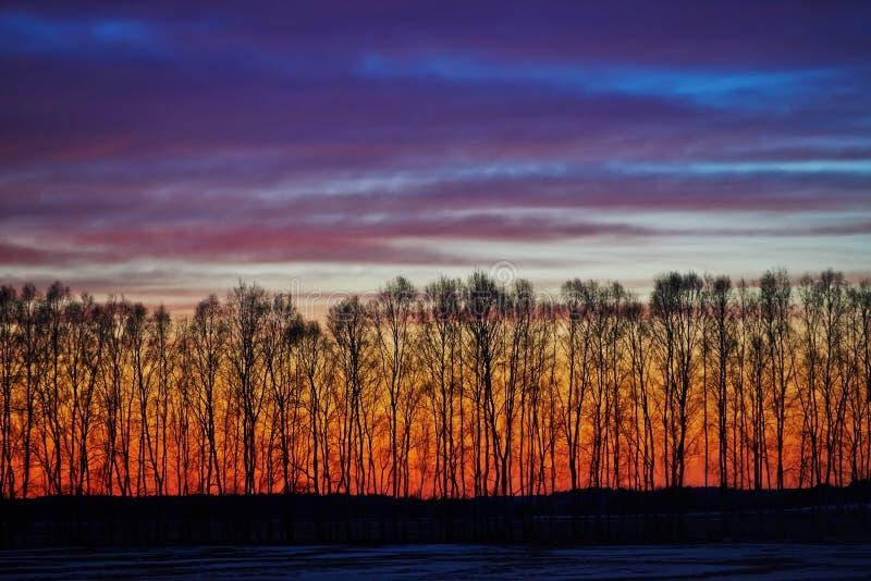 Tidig skymningsolnedgång i skog. landskap arkivfoton