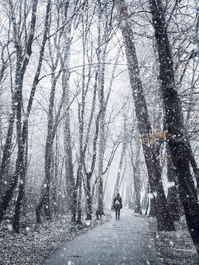Tidig snö, går i snön, snöskogen, saga fotografering för bildbyråer