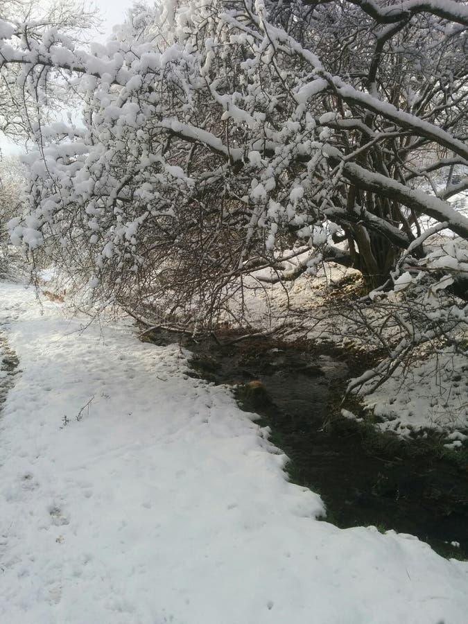 tidig snow royaltyfri foto