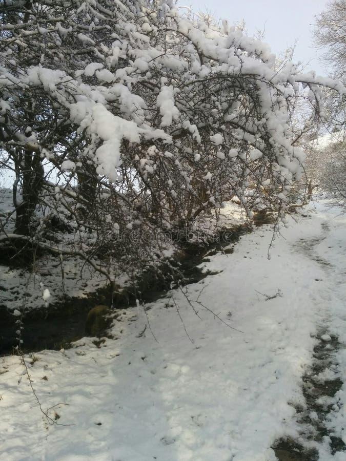 tidig snow royaltyfria bilder
