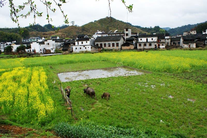 Tidig vår i sydliga Kina royaltyfri foto