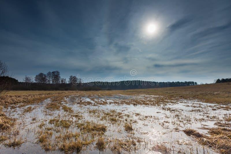 Tidig vår på äng nära våtmarker arkivbild