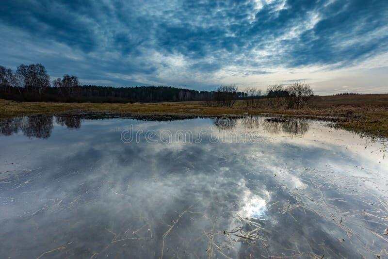 Tidig vår på äng nära våtmarker arkivfoton