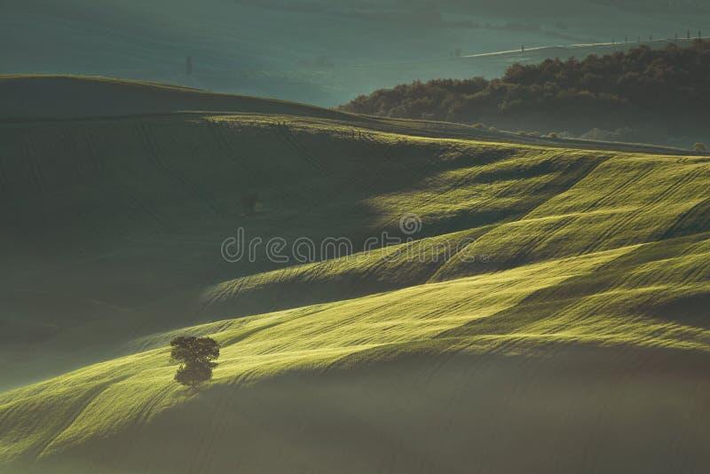 Tidig vårmorgon på Tuscany bygd, Italien arkivfoto